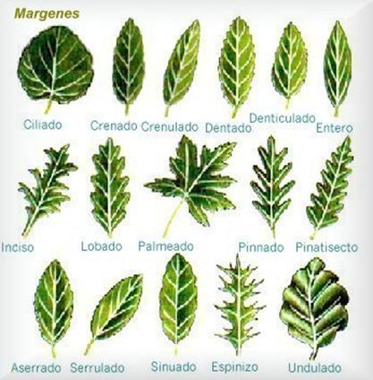 Introducci n a la anatom a vegetal alipso com for Vegetacion ornamental